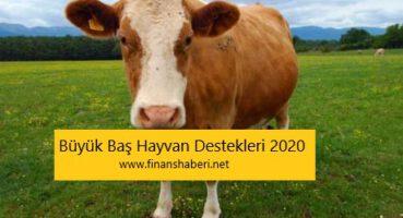 Büyük Baş Hayvan Destekleri 2020